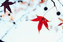 Leaf on tree.jpg