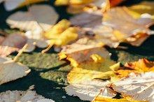 Leaves and sun.jpg