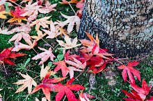Leaves and trunk.jpg