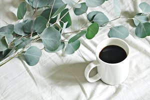 Eucalyptus + Coffee
