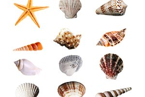 12 Isolated Sea Shells