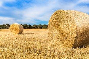 Straw bales field landscape