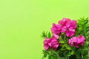 Fuchsia garden flowers bouquet