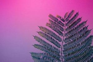 Fern duotone purple blue gradient