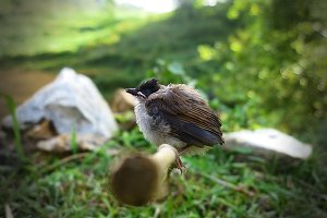 Sleeping Bird, Sparrow