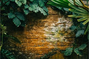 old brick wall overgrown with plants