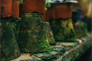 moss covered clay pots, close up