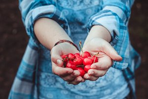 Red cherries in hand