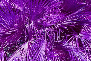 purple and violet palm leaves