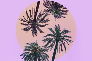 Mirrored Palm Trees