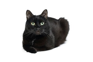 Black cat is isolated on white