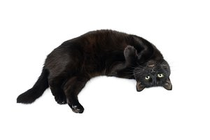 Black cat is lying relaxed on white