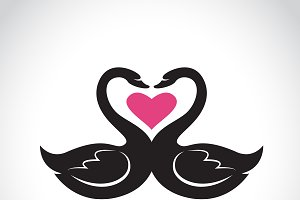 Two loving black swan and pink heart