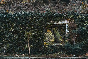 Hedgerow with the window and trees