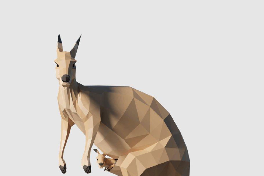 Kangaroo in Animals