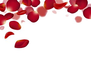 Red rose petals falling background