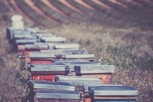 Beehives on the field in Provence
