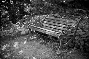 Old wooden bench in a forest