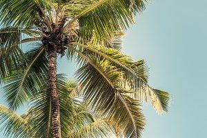 High palms