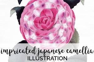 Impricated Japanese Camellia Vintage