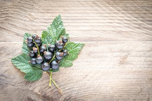 Fresh blackcurrant on leaves