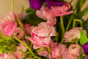 Spring concept. Bouquet of pink ranu