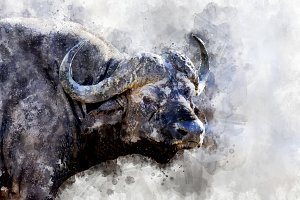 Buffalo - watercolor illustration po