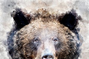 Bear - watercolor illustration portr