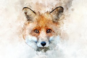 Red fox - watercolor illustration po