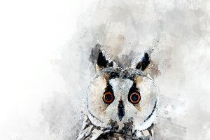 Owl - watercolor illustration portra