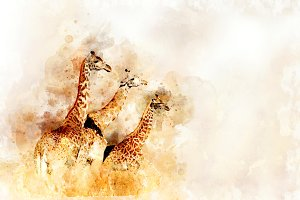 Giraffe - watercolor illustration po