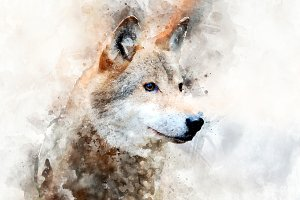Wolf - watercolor illustration portr