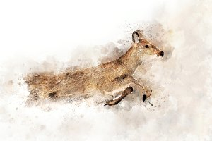 Deer - watercolor illustration portr
