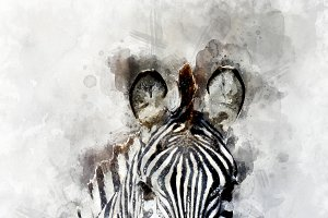 Zebra - watercolor illustration port