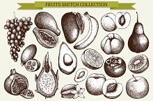 Fruit sketch collection