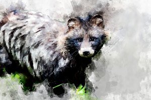 Raccoon - watercolor illustration po