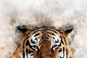 Tiger - watercolor illustration port