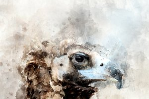 Vulture - watercolor illustration po