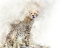Cheetah - watercolor illustration po