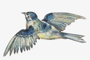 Vintage blue tit bird illustration