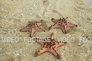 Starfish on the sand