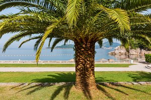 Summer park with palm trees (Montene