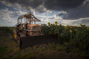 Bulldozer and Sunflowers