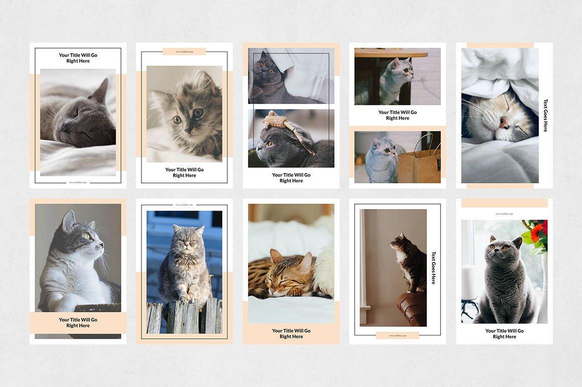 Cats Pinterest Posts