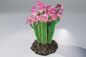 Cactus GGF