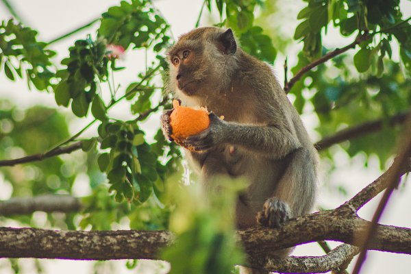 Animal Stock Photos: Roll Kader - Monkey