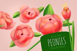 Peonies flowers Set