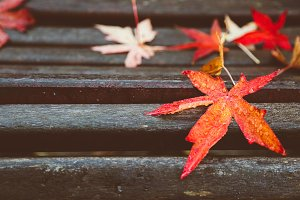 Red maple leaves on wooden bench