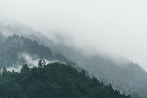 Dark and foggy forest in the storm