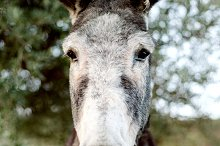 Funny portrait of a grey donkey l by  in Animals